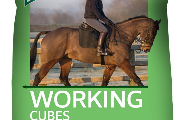 No. 2 Working Horse & Pony Cubes