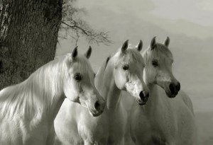 White Horse Equestrian Products | UK Equine Feed Supplier in France