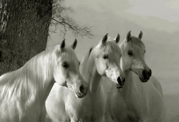 UK Horse Feeds in France   White Horses Equestrian Products