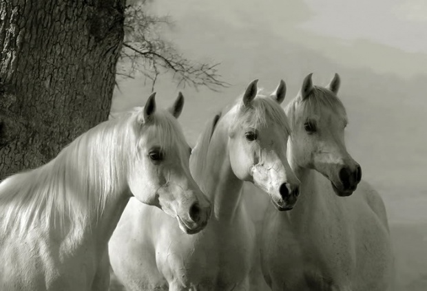 UK Horse Feeds in France | White Horses Equestrian Products
