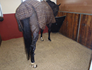 Ecobox Horse Bedding